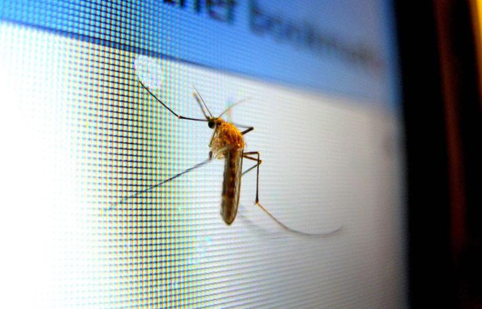 mosquito_monitor_
